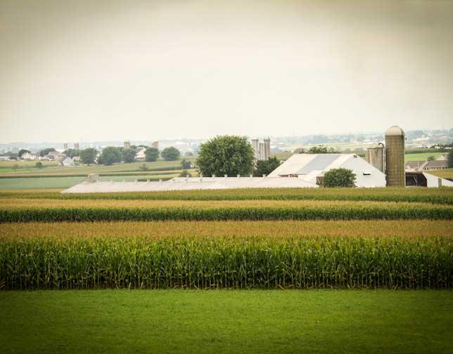 E. King Farm