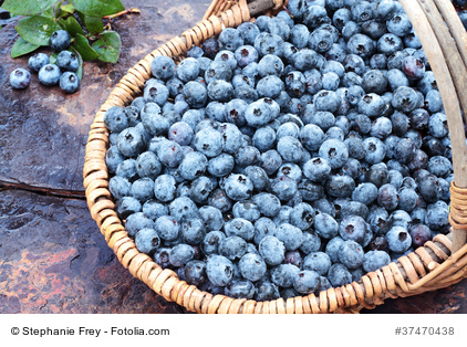 It's Time for Blueberries: 12 links and lots of ideas